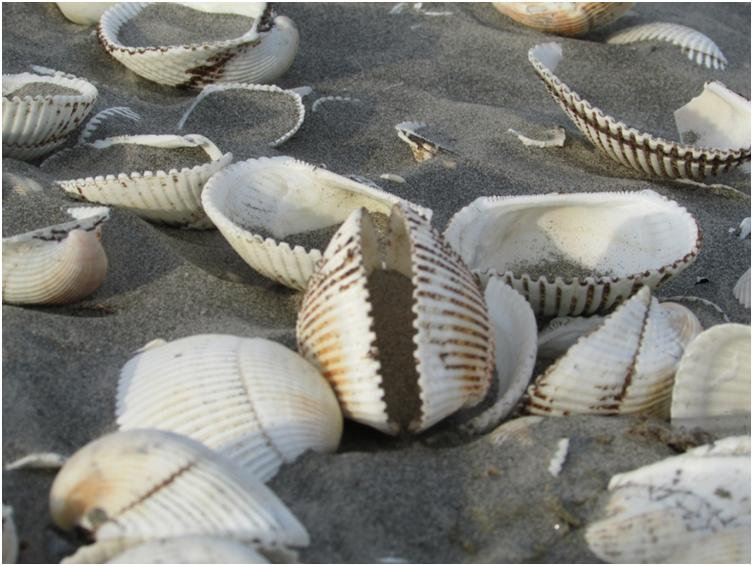 Sea Shells - Another day at the beach