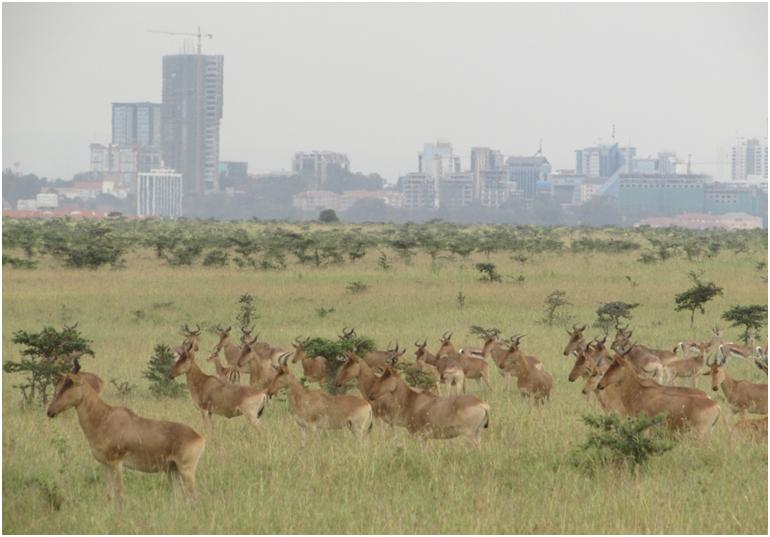 Nairobi National Park - Open Air Safari
