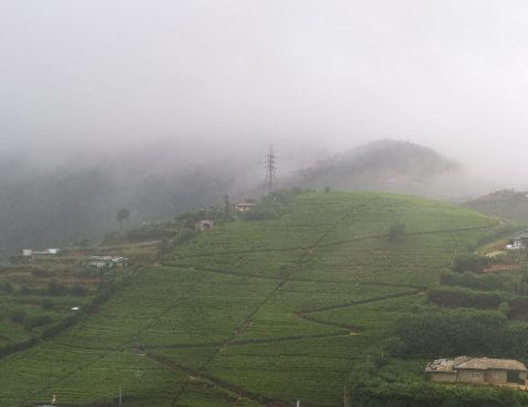 SriLanka-TeaGardens