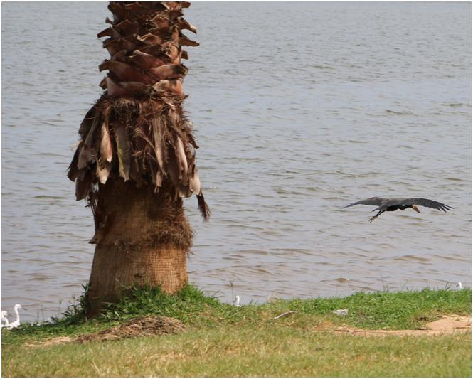Drive by shooting at Lake Victoria with Canon 70D