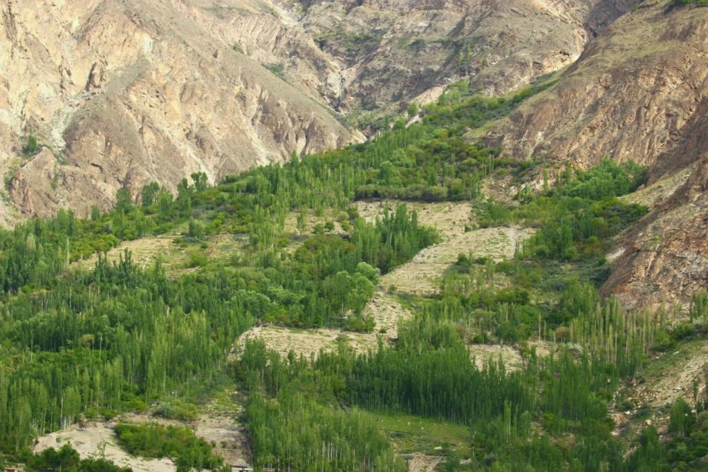 GreenTendrils-Gilgit-Hunza