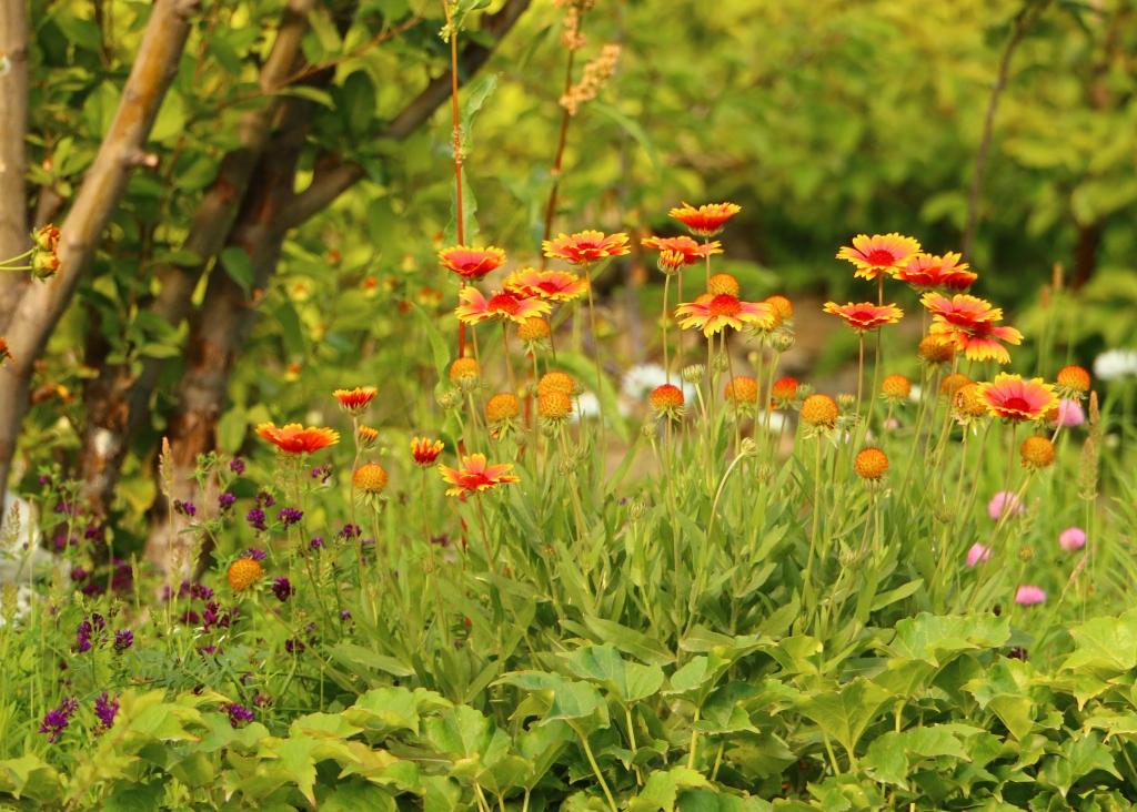 Organic-Garden-2