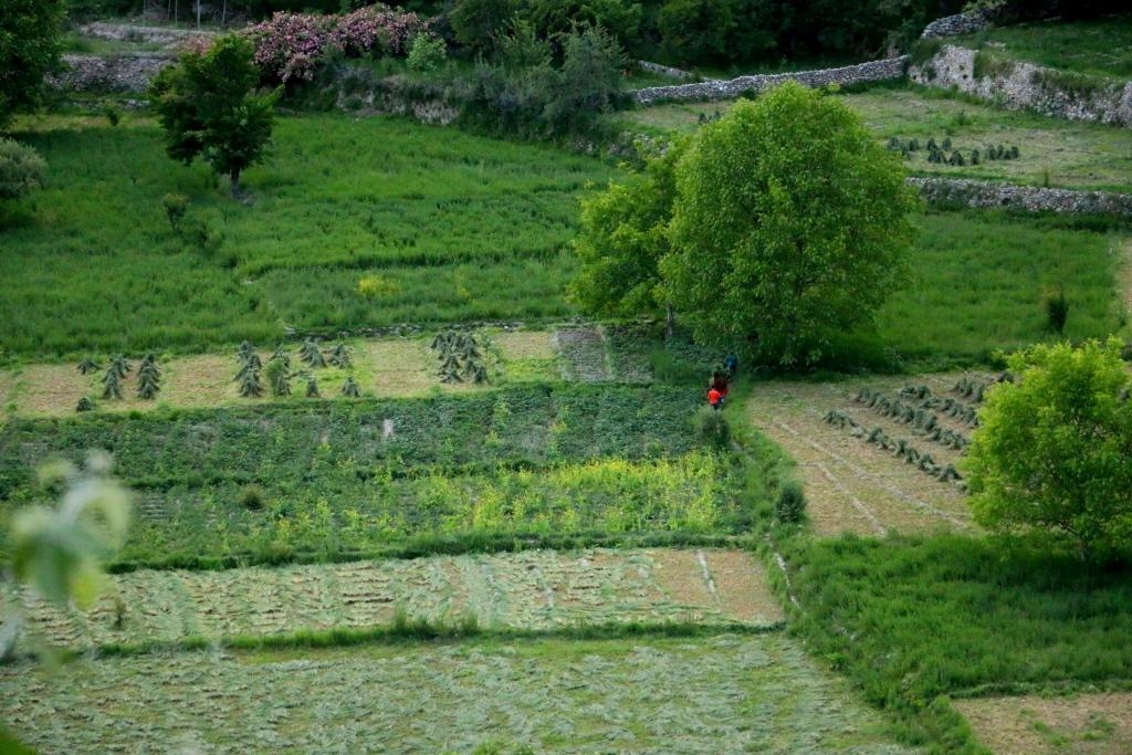 hunza-fields-sm